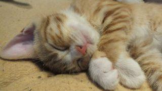 睡眠が健康に与える影響がハンパない!快眠もダイエット